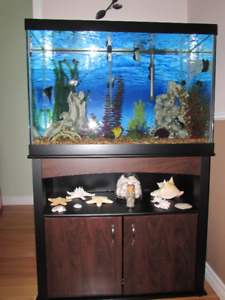Fish Aquarium with accessories