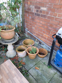 Free garden pots