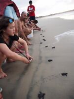 Turtle conservation program in Mexico