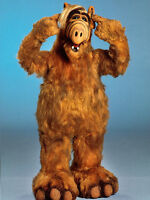 Looking for ALF