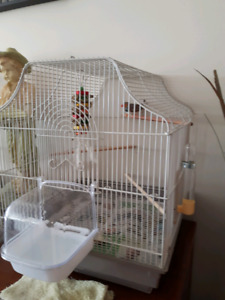 Zebra Finch, Cage and Acc.