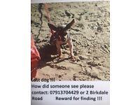 Lost dog !!