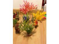 Aquarium plants SWAP