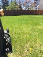 LAWN CUTS + SPRING CLEANUP + HEDGE TRIMMING