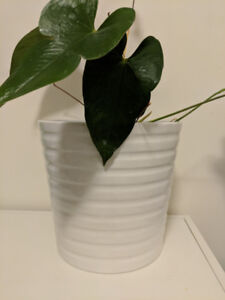 MOVING SALE! PLANT POT AND HANGING BASKETS FOR SALE! $20 OBO