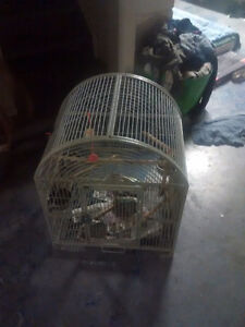 Bird Cage Need Gone