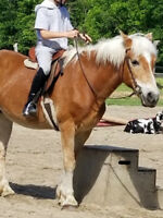 Pony Rides Petting Zoo Available For Parties/Events