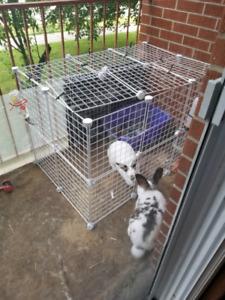 Bunny escaped.!!!!