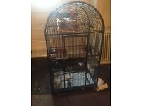 Bonded pair of Quaker parrots £200 and cage