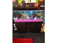 Boyu fish tank & koi fish complete with everything!