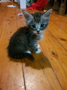 Kittens ready looking for homes