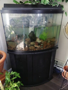 Bow Front Aquarium and Stand, 40 gallons