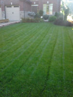 LAWN CARE, WEEKLY CUTS AS LOW AS $20, CALL 519-788-3761