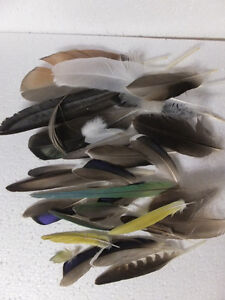 CRAFTING BIRD FEATHERS FROM GERMANY London Ontario image 3