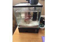 5 litre cube fish tank