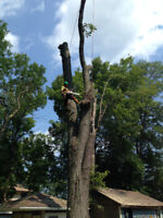 Contract Climber/Arborist For Hire