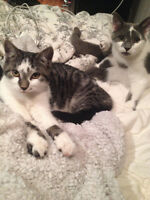 Free Sister Cats Looking for Happy Home