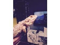 Taking all unwanted reptiles with vivariums