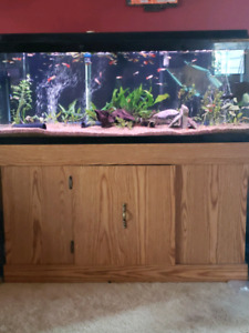 Looking for a Monster tank/setups! 180G+