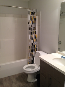Young Professional Seeking Roommate