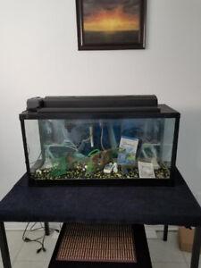 Aquarium petits poissons