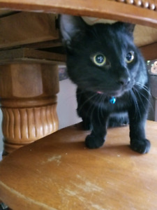 Looking to rehome 2 male cats (1 unfixed)