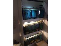 Fish tanks rack