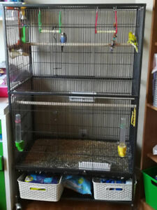 5 Parakeets / Budgies and 2 cages (Med & Large) for sale