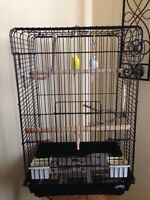 Budgies and large cage