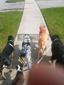 Professional Dog Walking - by a trainer
