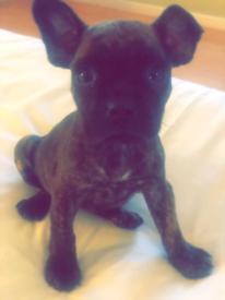 FB Pup