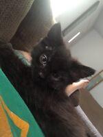Kitten to good home