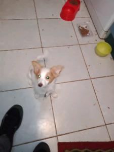 Newcastle Region, NSW   Dogs & Puppies   Gumtree Australia Free