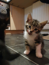 5 male and 1 female kittens