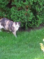 FOUND brown and cream tabby/calico CAT IN EAST END