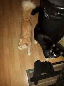 Two Spayed female cats