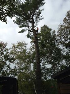 Tip Top Tree Removal and Services Cambridge Kitchener Area image 2