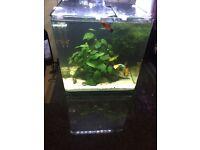 Planted aquarium /fishtank