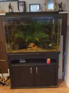 Fish tank with fluval exterior filter for sale