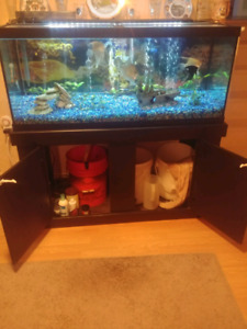 75 Gallon fish tank and fish