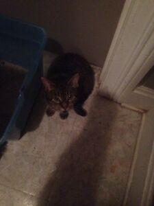 Found Kitty!!