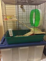 Black bear hamster + cage and accessories for sale
