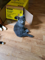 Kittens - free to good homes