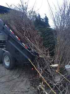 S.S.C - Renting skid steers and dump trailers Regina Regina Area image 6