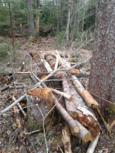 Free logs and brush