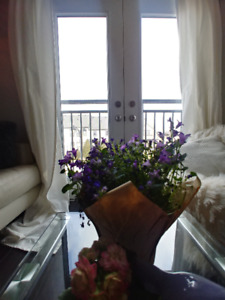 Short term rental! Beautiful, bright, furnished, newly built