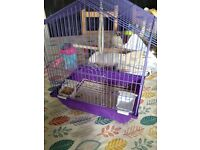 Female Java sparrow and cage for sale