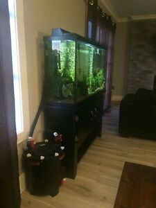 60g aquarium with all equipment and fx6