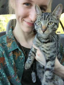 EXPERIENCED PET SITTER Available for Brantford Paris Woodstock