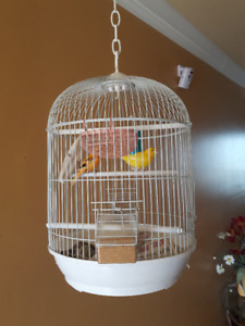 Canary birds with cage
